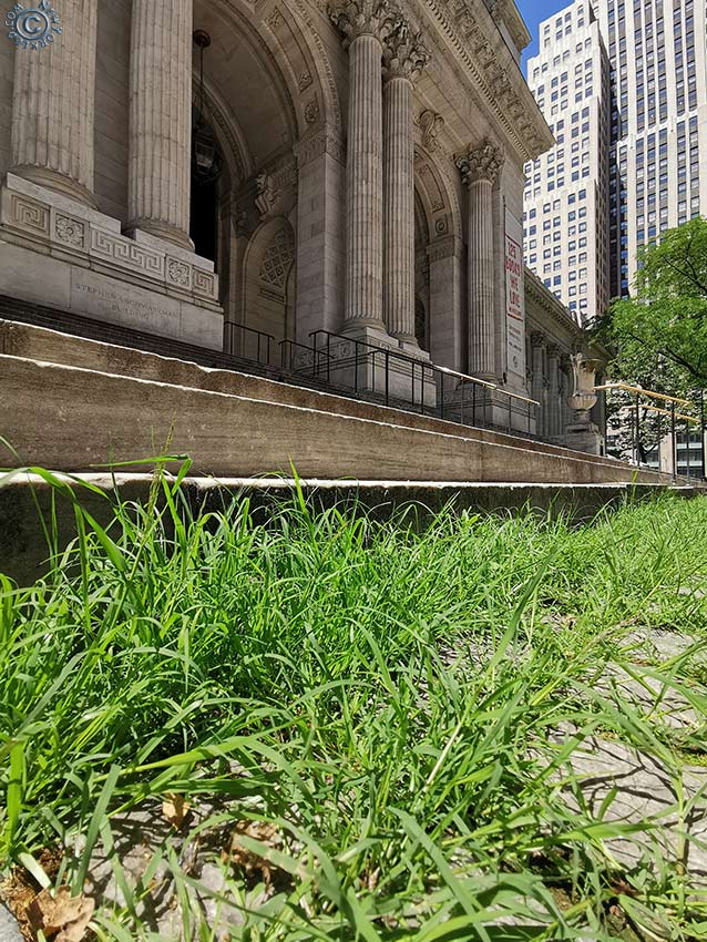 I AM LEGEND - Weeds at the Base of the NY Public Library
